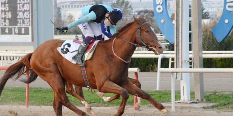 Mudanya Koşusu'nda birinciliğe URLA RUZGARI uzandı