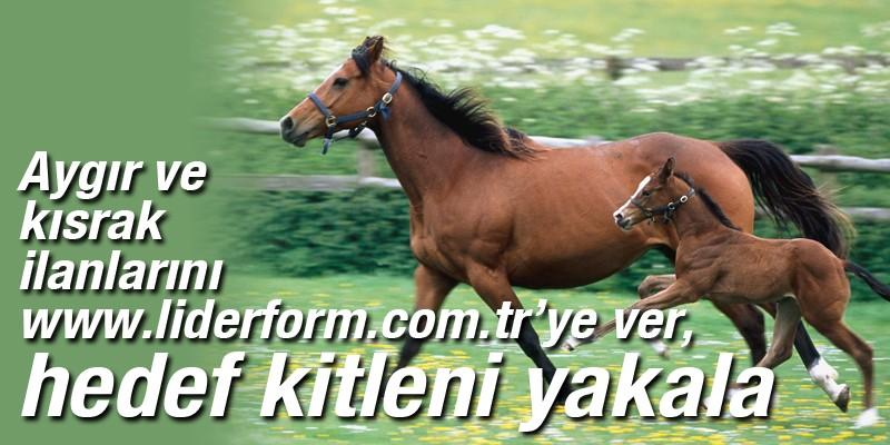 Aygır ve kısrak ilanlarını at yarışının amirali www.liderform.com.tr'ye ver