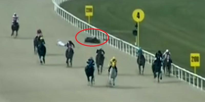 İlk yarışını koşup faullere maruz kalarak jokeyi ile birlikte yıkılan tay uyutuldu