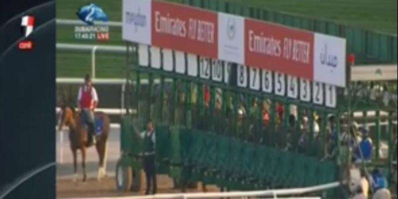 9 Mart Cumartesi günü Dubai World Cup Karnaval'ında Good Curry 2.olarak Yarış camiasını sevince boğdu.