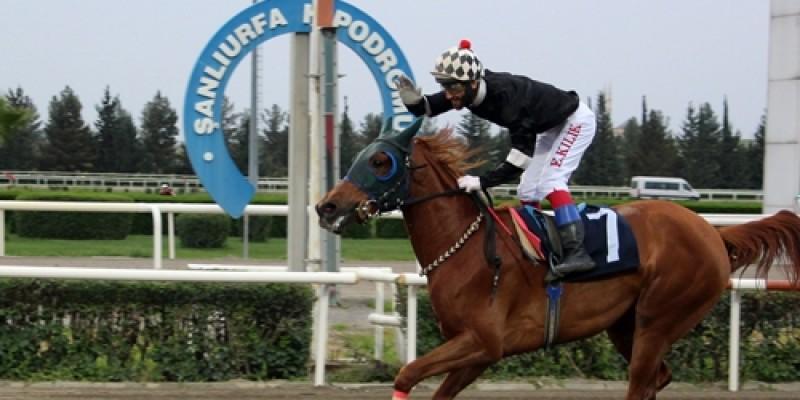 3 Yaşlı Dişilerin katıldığı safkan Arap taylarının ilk yarışını Leylanur jokey Ersin Kılık ile kazandı