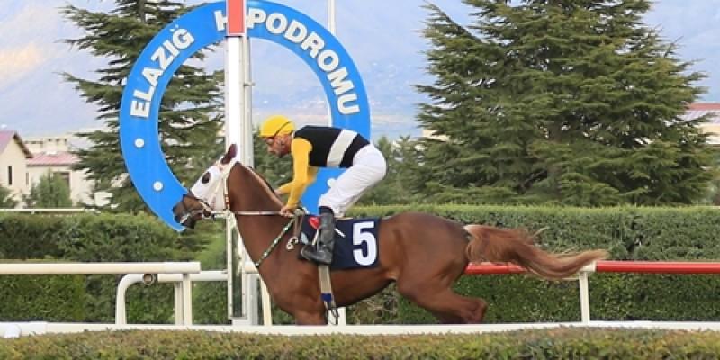 Elazığ Hipodromu'nda İlkbahar – Yaz yarış sezonu açılış koşusunu KERKERE jokeyi M.DOĞAN ile kazandı