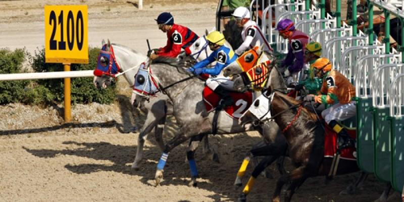 Ankara Hipodromu Bir sonraki yarışında  mutlaka takip edilmesi gereken safkanlar