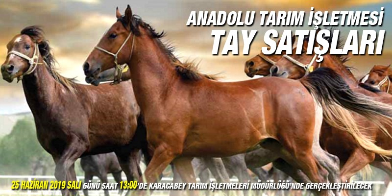 Anadolu Tarım İşletmesi tayları satışa sunuluyor
