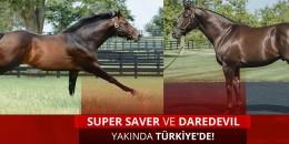 TJK Yeni Aygırları SUPER SAVER ve DAREDEVIL  ile birlikte 5 yeni aygır oldu