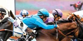 Eroğlu / Gözel Ekürisi'nden Kadro Fazlası Satılık Koşan Atlar