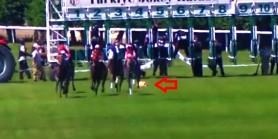 Jokey Ahmet Çelik start çıkışında  atın başındaki örtüyü almayı unutunca uyarı aldı.