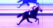 Satılık Koşar Durumda İngiliz Atı