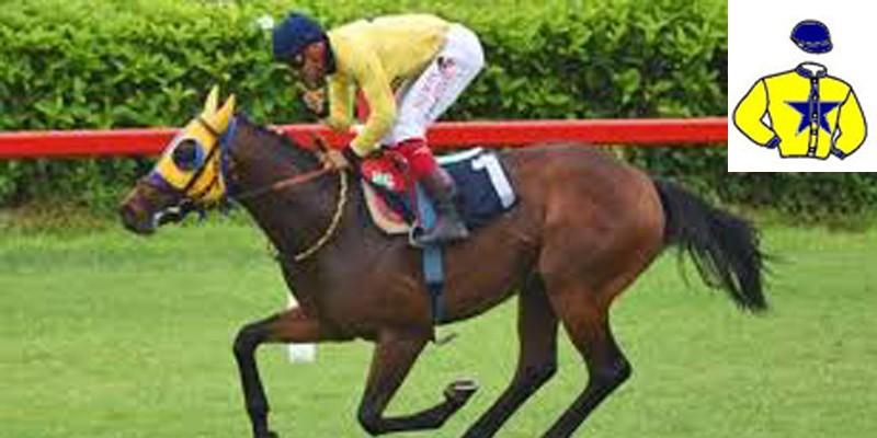 KEFOĞLU Ekürisi'nden Satılık Koşar Durumda Atlar