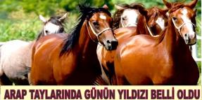 Ankara Cumartesi Arap Taylarında Günün Yıldızı AYPARS oldu