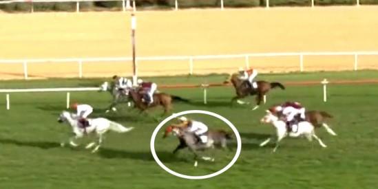 At bugün koşmak istemedi binicisi elinde geleni yaptı yarışı 5. bitirdi