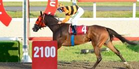 Mustafa  Alver Koşusunu ÇİRÇUZ zorlanmadan kazandı