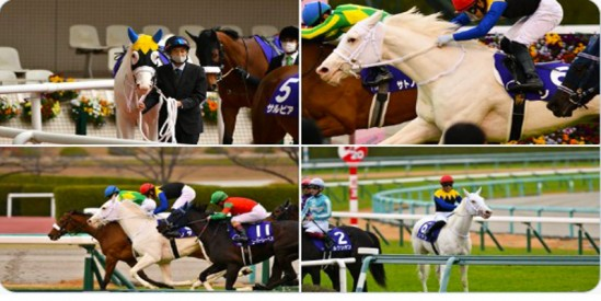 Dünyada (G1) Kazanan İlk Beyaz At