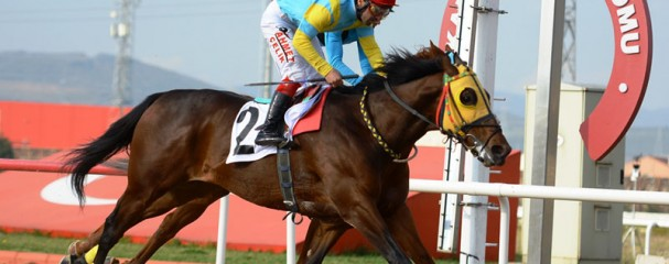 Satılık Yarış Atı, Bugün Al Yarın Koş