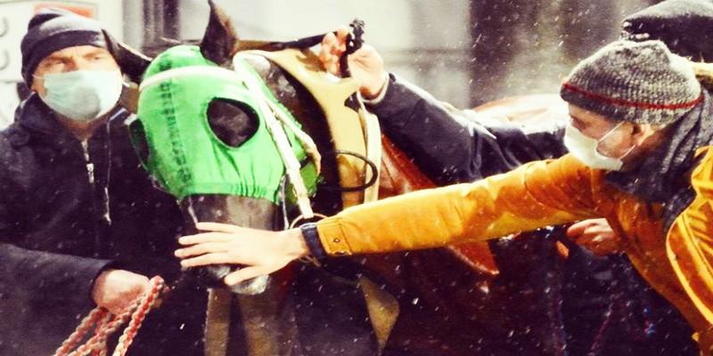 At Yarışı camiası büyük bir âiledir. JACK SPARROW, ZABUN mücadelesi nefesleri kesti.