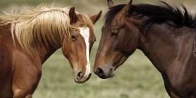 At göstermede ciddi bir kaza olması artık çok yakın.Pazar maiden analizi yapıldı.
