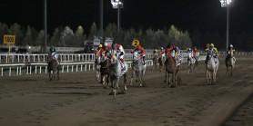 Şanlıurfa Vali Kupası Koşusu'nu CİBEK OĞLU kazandı, PITIR ve DERVİŞ BEY mücadelesi nefesleri kesti