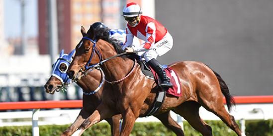 LIGHT OF DARKNESS, koşan tek dişi safkan olup 4 erkek atı mağlup ederek Ergin Talay Koşusu'nu kazandı