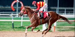 Adana'da AGF %30 (1) at olan safkan koşuyu 5.bitirdi, sol ayağında topallık tespit edildi
