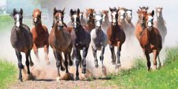 Günün yıldızı GÜNEŞKRAL ve BİGBOSS oldu 25 Temmuz Pazar İstanbul-İzmir Maiden yarışların analizi yapıldı