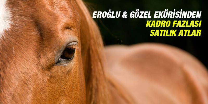 Eroğlu & Gözel Ekürisi'nden Kadro Fazlası Satılık Atlar