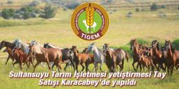 Sultansuyu Tarım İşletmesi yetiştirmesi Tay Satışı Karacabey'de yapıldı