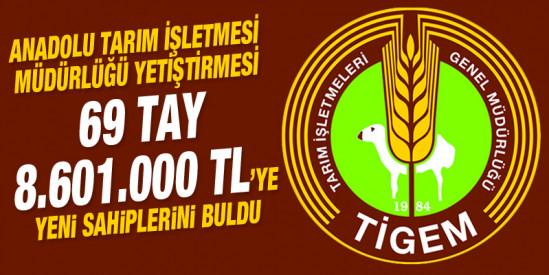 Anadolu Tarım İşletmesi yetiştirmesi Tay Satışı Karacabey'de yapıldı