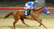 Satılık Koşar durumda Sorunsuz İngiliz Atı