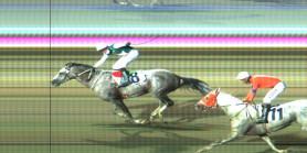 OĞLUMRECEP binicisi İ.Katar YILDIZABAKAN'a at göstererek Vali Koşusu'nu kazandı