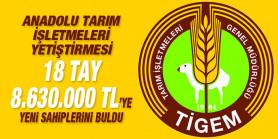Anadolu Tarım İşletmeleri yetiştirmesi taylar 8.630.000 TL'ye alıcı buldu